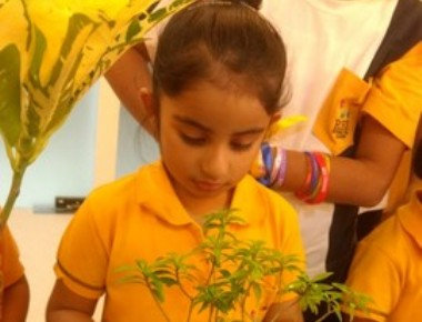 RBK International Academy, Chembur Celebrated by tying the friendship band to sapling.