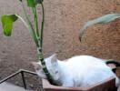 ನೈಸರ್ಗಿಕ ಹವಾಮಾನ-ಆಮ್ಲಜನಕ ಸೇವಿಸಿ ಬದುಕು ಆನಂದಿಸುವ ಮಾರ್ಜಲ