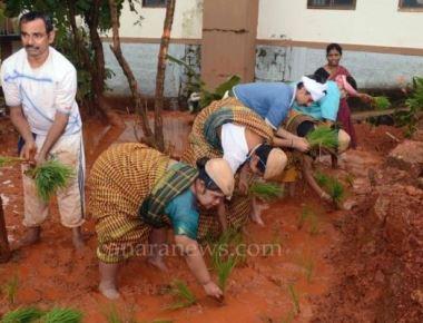 Asare inmates plant paddy saplings