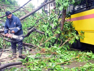 First spell: 30 trees down, trains delayed