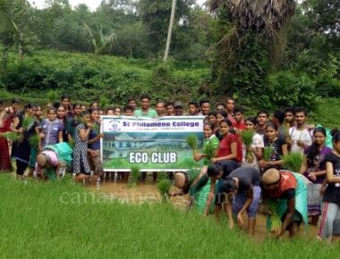 Eco Club members of St Philomena College Puttur plant paddy seedlings