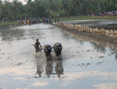 The historic Thonse Padumane Kamabotsava of Kemmannu was held with traditional fervor