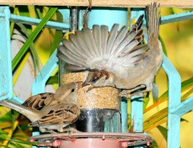 Valentine's Day celebrated by birds