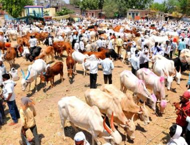 Possession or consumption of beef not a crime: HC