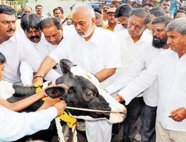 State may move SC over cattle trade curbs
