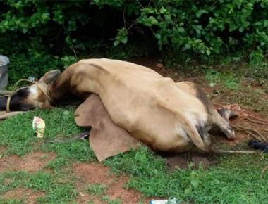 Lightning strike claims life of cow
