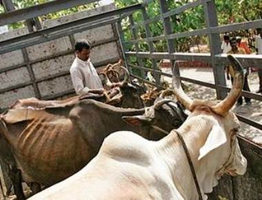 Illegal slaughter house raided; four held