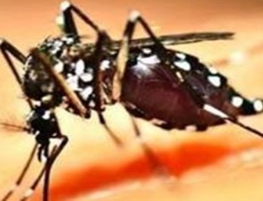Australian researchers find unique way to combat dengue
