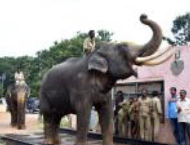 Dasara jumbos weighed, Arjuna heaviest at 5,615 kg