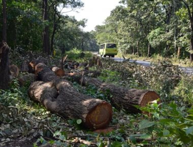 Over 22k trees to be felled for widening NH 4A