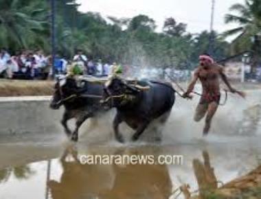 Stop hosting Kambala, AWBI urges State govt