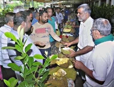 Jackfruit Mela attracts crowds