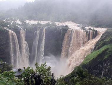 Jog Falls roars to life