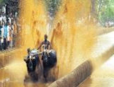 Kambala in Moodbidri on January 28