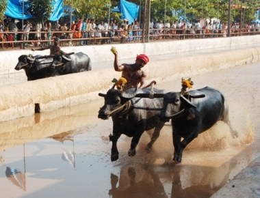 Kambala protests in Karnataka: Students, politicians form human chain, demand ban on PETA