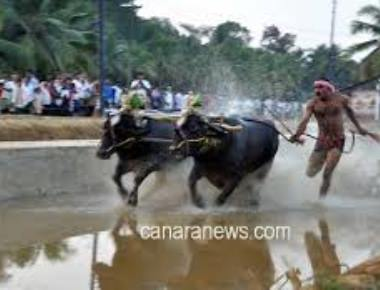 Karnataka disputes PETA claim on Kambala ordinance