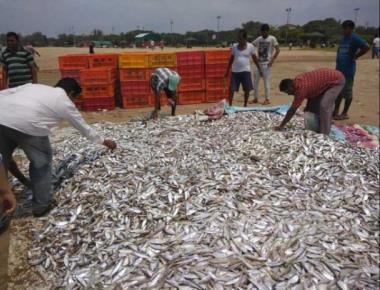 Karwar fishermen hit festive jackpot