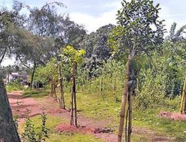 87 hectares under Kokum now