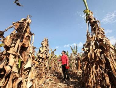 Marathwada drought: ministers visit region, face farmers' ire
