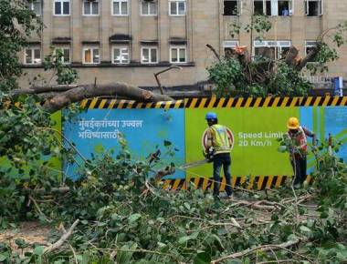 Activists lambast tree transplantation in wrong manner by MMRC
