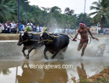 Kambala still illegal, govt must stop it: Animal Welfare Board