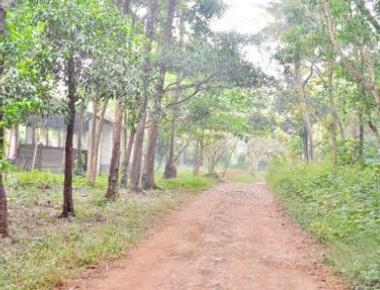 A biodiversity patch at Padil will soon make way for a govt. office