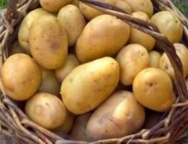 Eating potatoes ups potassium, fibre in kids