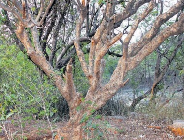 Govt withdraws bill to amend Tree Act