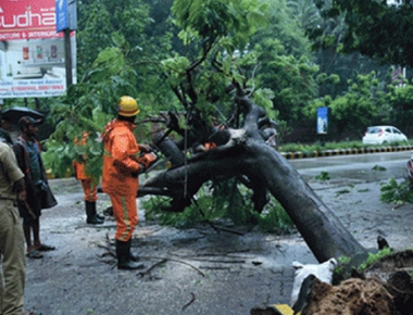 Huge tree uprooted near Ladyhill