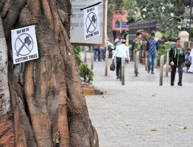 HC vacates stay on felling trees for Metro III project