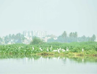 Now, Forest dept wants to develop all lakes